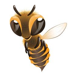 happy bee vector image