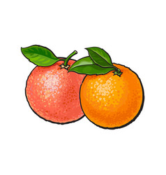 whole shiny orange and pink grapefruit with fresh vector image vector image