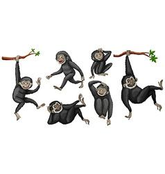 Gibbon set vector image