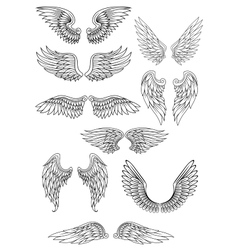 Heraldic bird or angel wings set vector