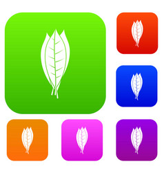 Culinary bay leaves set color collection vector