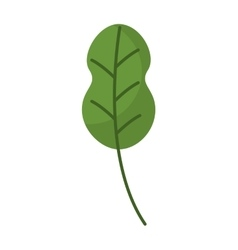 Leafs plant vegetarian food vector
