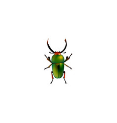 Realistic beetle element of vector