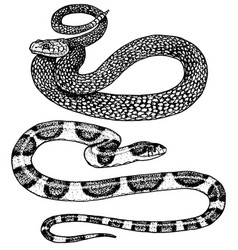 Viper snake serpent cobra and python anaconda or vector