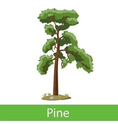 Pine cartoon tree vector