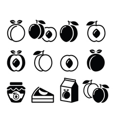 Peach apricot fruit icons set vector image