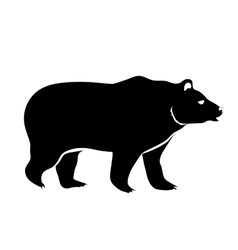 Bear isolated on white vector