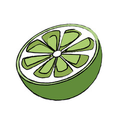 slice lemon citrus fruit vitamins vector image