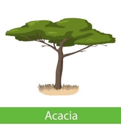 Acacia cartoon tree vector