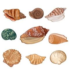 Set seashells vector image vector image