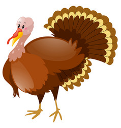Wild turkey on white background vector
