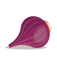 Red onion nutrition healthy image vector