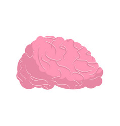 Brain isolated human brains on white background vector