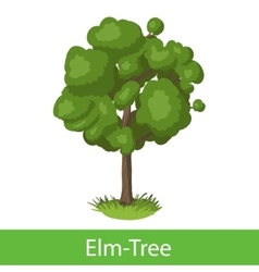 Elm-tree cartoon icon vector