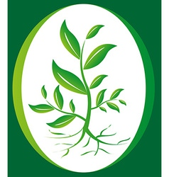 Green plant background vector image vector image