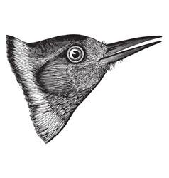 Lewis woodpecker head vintage vector