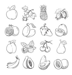 hand drawing doodle fruits for vector image