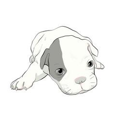 dog-boxer vector image