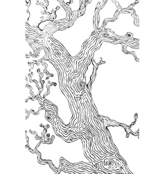 Oak tree branch and trunk vector