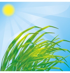 Spring background with fresh grass vector