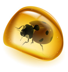 Amber and beetle on white background for design vector