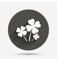 Clovers with four leaves sign St Patrick symbol vector image