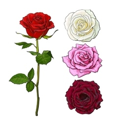 Set of pink white red rose top and side view vector