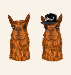 alpaca hipster character vector image vector image