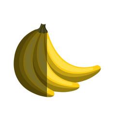 Banana tropical fruit isolated icon vector