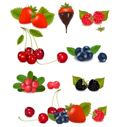 berries and cherries vector image