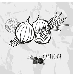Hand drawn whole and sliced onions vector