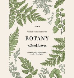 Botanical with leaves boxwood vector