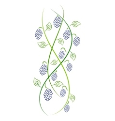 Doodle color abstract handdrawn vine grape vector