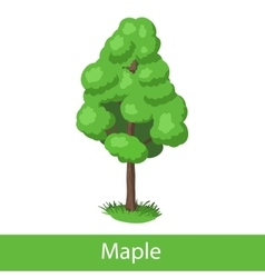 Maple cartoon tree vector