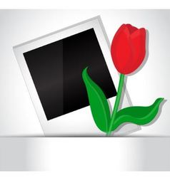 Photo and tulip vector image vector image