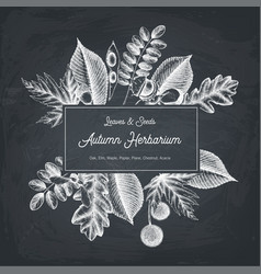 Autumn design card on chalkboard vector