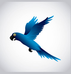 Blue macaw design vector
