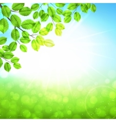 Abstract nature background with leaves and sun vector image vector image
