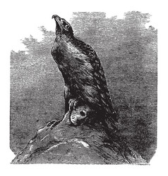 Birds of prey vintage vector