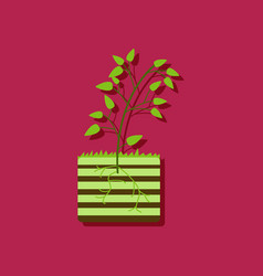 Flat icon design collection plant and root in vector