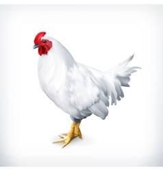 White chicken vector image