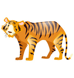 wild tiger on white background vector image vector image