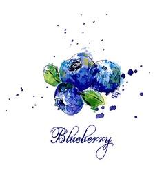 Blueberry vector