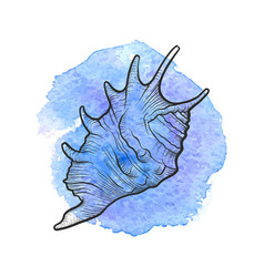 Hand drawn seashell vector