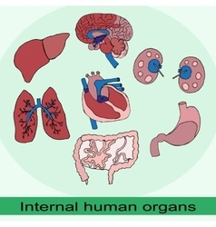 internal organs of the human set vector image
