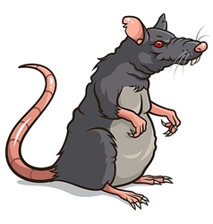 Rat vector image