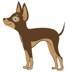 Russian toy terrier vector image vector image