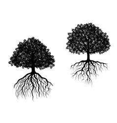 Two trees showing different root systems vector