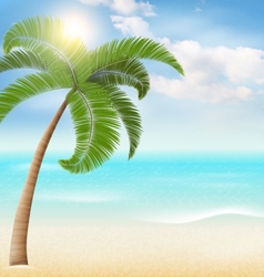Beach with palm and clouds summer vacation vector