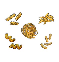 sketch hand drawn italian pasta types set vector image